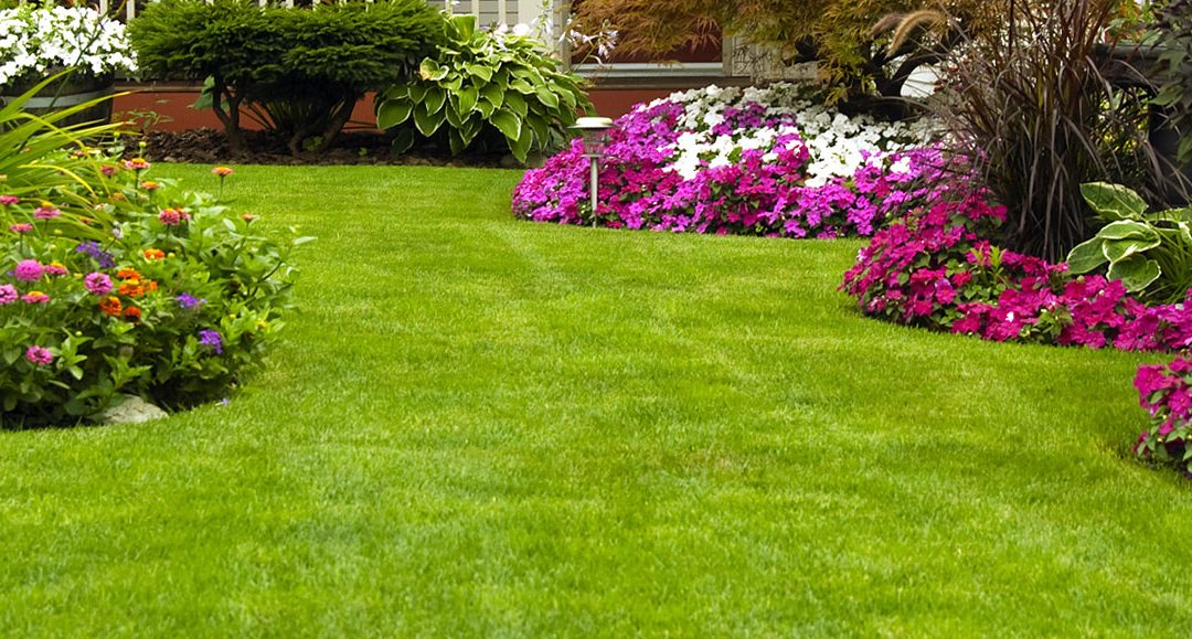Benefit Of Getting Your Lawns Cut Regularly