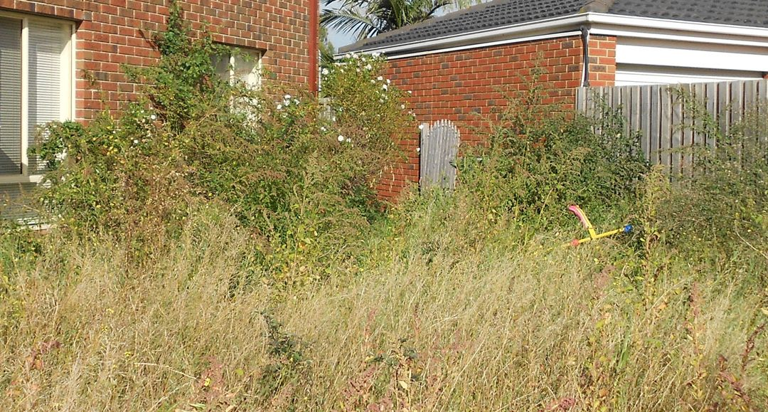 Don't Let This Happen To Your Garden!