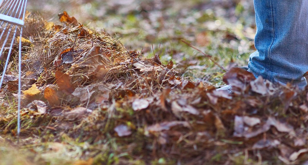 Winter Lawn Maintenance and Care – Tips