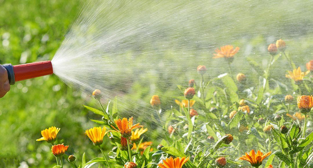 Simple Guide for Summer Gardening in Australia