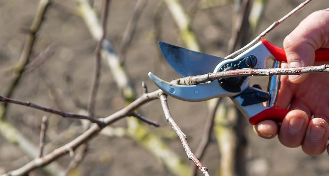 Pruning Sprees, Bare Root Trees: Busy July Gardens