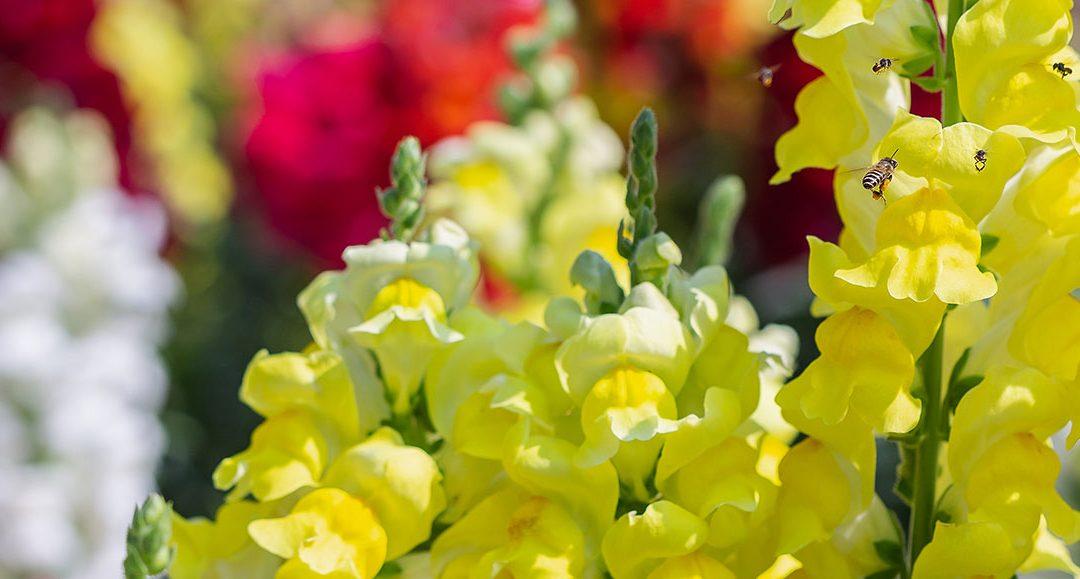 Springtime Gardens, Come September